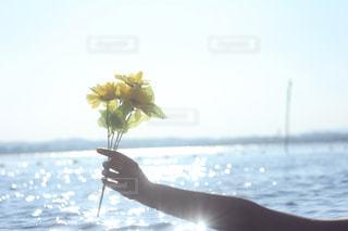 夏の日の海の写真・画像素材[865901]