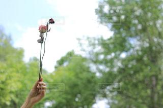 花を持っている人の写真・画像素材[865906]