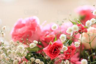 花束の写真・画像素材[1106327]