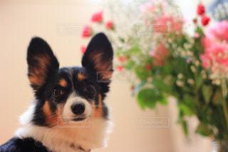 犬と花の写真・画像素材[1106328]