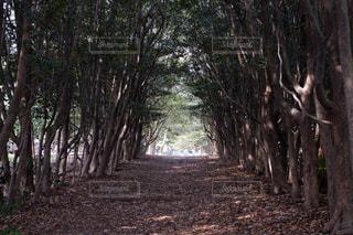 木のトンネルの写真・画像素材[1106339]