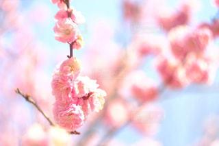 春色の写真・画像素材[1106340]