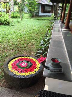 リゾートホテルの庭の写真・画像素材[865615]