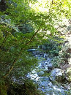 森を流れる川の写真・画像素材[865882]