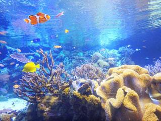 水は、ぬいぐるみの動物のグループの写真・画像素材[867515]