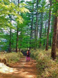 森の中の土の道に乗る男の写真・画像素材[875226]