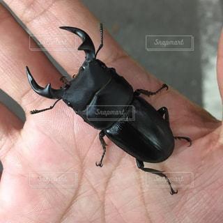 地上で昆虫の写真・画像素材[866788]