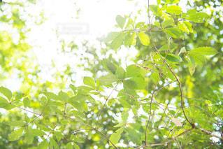 木の枝にとまった鳥の写真・画像素材[867583]