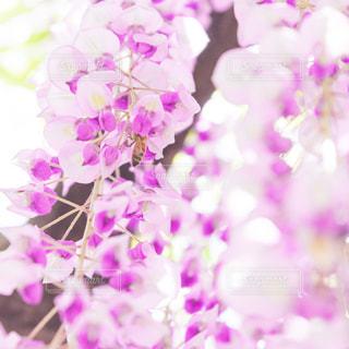 近くに紫の花のアップの写真・画像素材[867588]