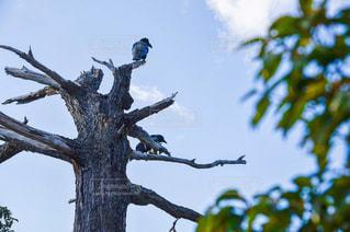 木の枝にとまった鳥の写真・画像素材[870247]