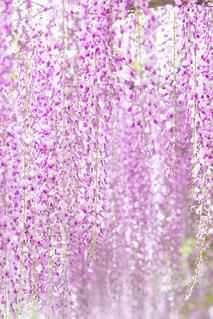 近くの花のアップの写真・画像素材[870257]
