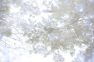 近くの木のアップの写真・画像素材[871538]