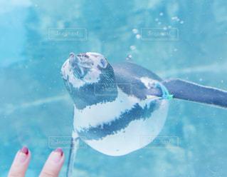水の中を泳いでいる人 - No.871546