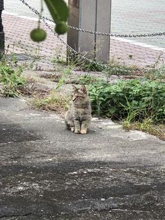 お母さんのいる方向を見つめる子猫の写真・画像素材[866661]