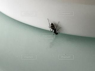 変わった蟻の写真・画像素材[866688]