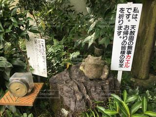 愛媛県の天赦園にいる無事カエルの写真・画像素材[867218]