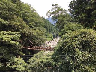 森の中の吊り橋の写真・画像素材[867454]