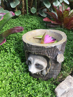 たぬきの置物と草花の写真・画像素材[867798]