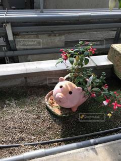 ブタの植木鉢に咲く赤い花の写真・画像素材[867800]