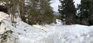 雪に覆われた斜面と森木々 - No.1025164