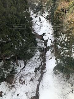 雪に覆われた山道とそれを囲う木々の写真・画像素材[1025177]