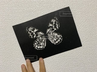 オオゴマダラの切り絵作品の写真・画像素材[2777645]
