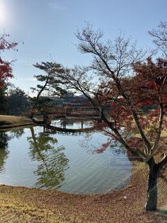 池と紅葉樹のある景色の写真・画像素材[2791593]