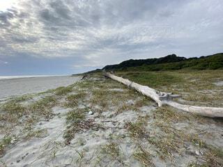 砂浜に横たわる巨大な流木の写真・画像素材[3832561]