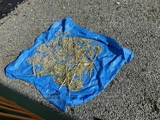 ブルーシートの上で天日干しされるマコモダケの写真・画像素材[3839363]