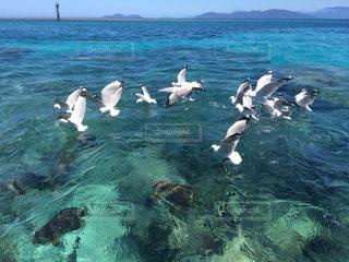 青い海とカモメの写真・画像素材[867757]