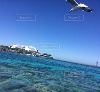 水面近くを飛ぶカモメ達の写真・画像素材[867817]
