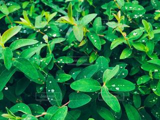 緑の植物のグループの写真・画像素材[870362]