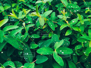 緑の植物のグループの写真・画像素材[870365]