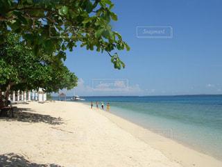 セブのビーチの写真・画像素材[871847]
