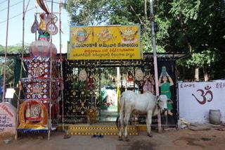 店の前にいる牛の写真・画像素材[2509710]