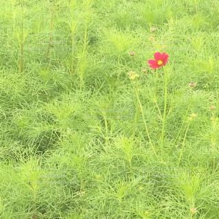 さきがけの花 - No.872931