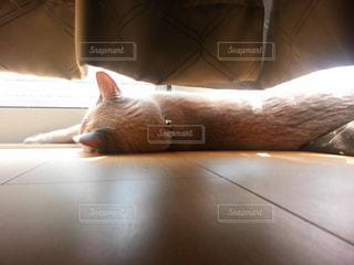 横になってる猫 - No.873692