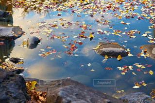 池の写真・画像素材[905418]