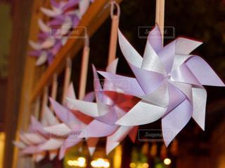 風車 川越 氷川神社の写真・画像素材[867556]