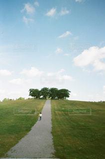 背景の木と大規模なグリーン フィールド - No.867826