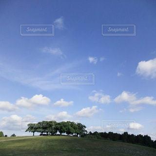 背景の木と大規模なグリーン フィールド - No.867866