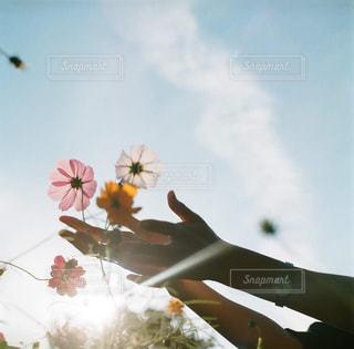 曇りの日に花の花瓶の写真・画像素材[867869]