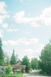 近くの木のアップ - No.869840