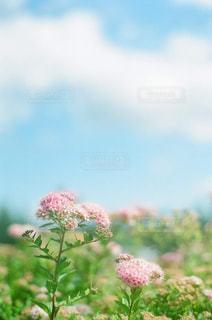 植物にピンクの花の写真・画像素材[869841]