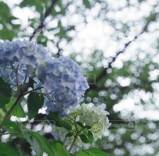 近くの花のアップ - No.869968