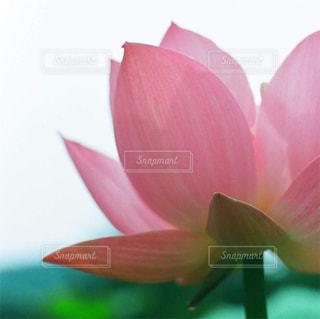 植物にピンクの花 - No.871839