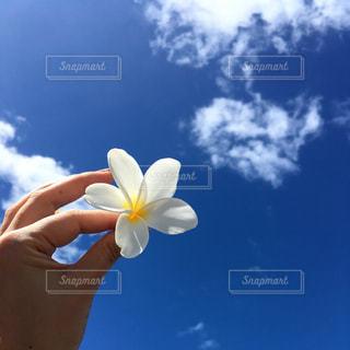 花を持っている手 - No.871862