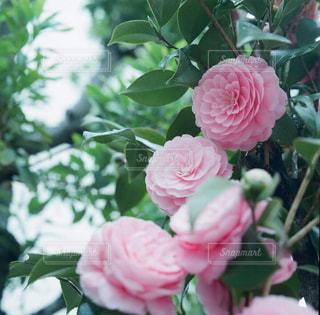 近くの花のアップの写真・画像素材[871865]