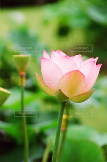 近くの花のアップ - No.871873