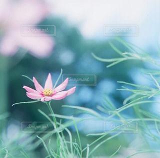 近くの花のアップの写真・画像素材[876021]